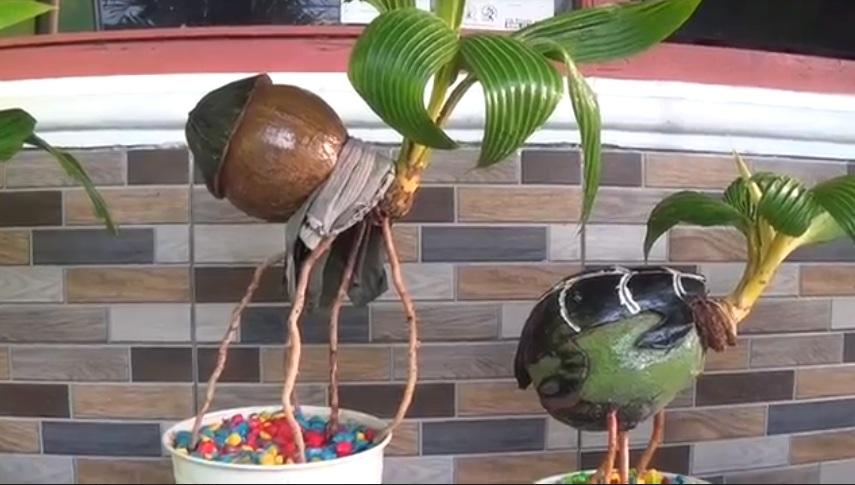 Menyulap Kelapa Menjadi Bonsai