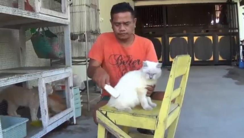 Melacak Mitos Menabrak Kucing Bikin Sial