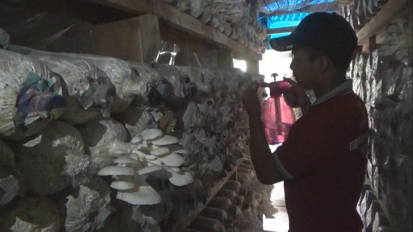 Raup Jutaan Rupiah dari Belakang Rumah