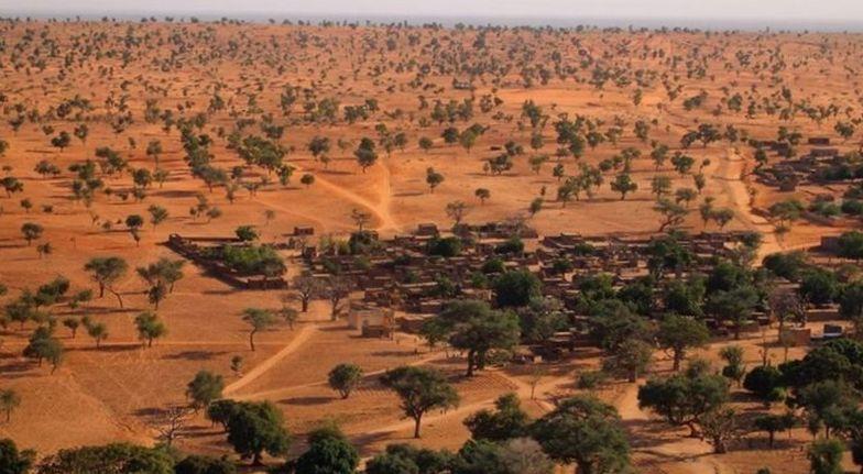 Ratusan Juta Pohon Ditemukan di Gurun Sahara