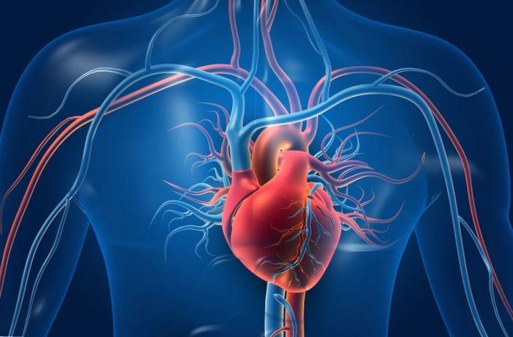 Jantung Palsu Dijual Rp2,5 Miliar